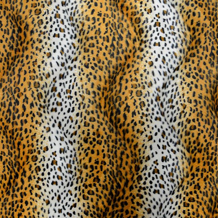 Živali, gepard, 12575-006
