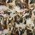 Cotton, poplin, animals, dogs, 15525-101 - Bema Fabrics