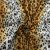 Živali, gepard, 12575-006 - Svet metraže