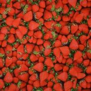Jersey, bombaž, digital, sadje, 16276-270